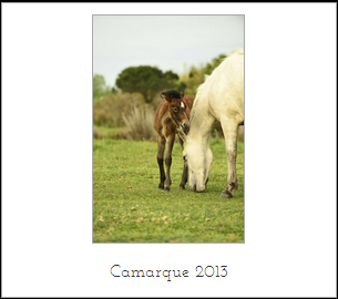 camarque2013