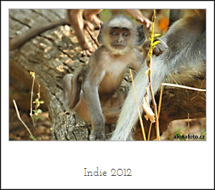 indie2012