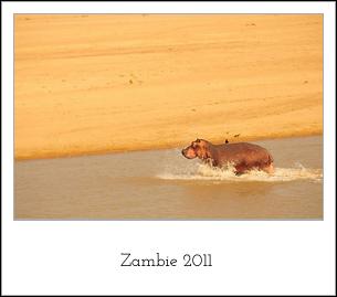 zambie2011